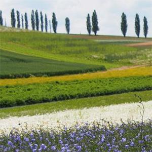 Agrarlandschaft R. Schubert
