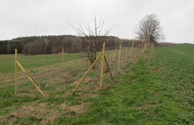 Komplettierung und Anschluss an Waldgebiet durch Neupflanzung