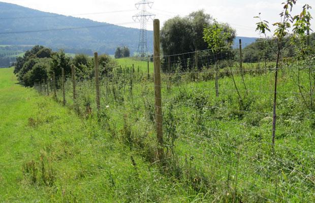 Lückenschluss in den bestehenden Hecken (3-reihige Neupflanzung)