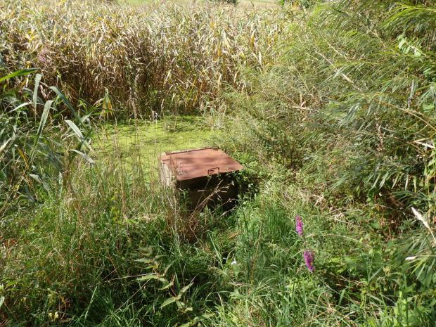 Verlandungszone und Teichmönch