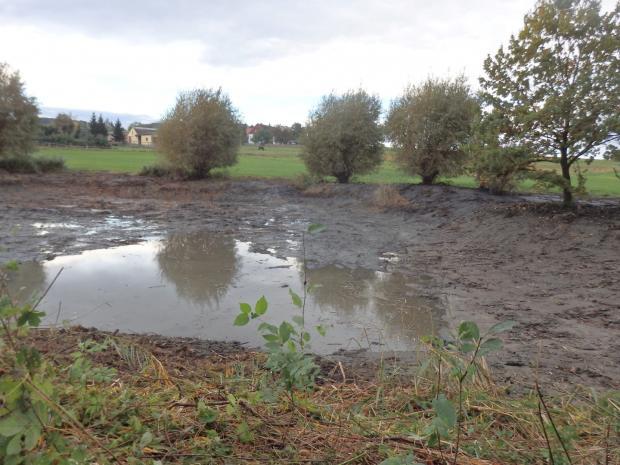 Kleingewässer kurz nach der Sanierung
