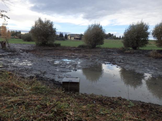 Neu entstandene Verlandungszone des Kleingewässers