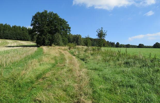 Vorher: Fehlende bzw. lückenhafte Heckenanbindung an den Wald