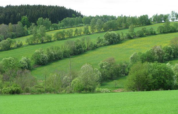 Steinrücken in Großrückerswalde