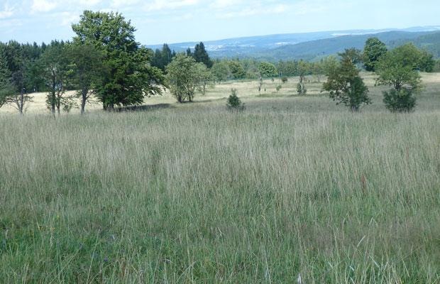 Mahdfläche in Johanngeorgenstadt