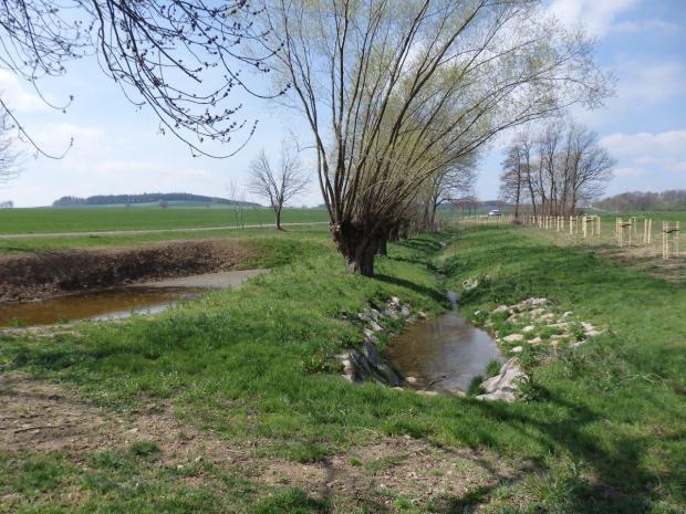 Zulauf Beerwalder Bach nach der Umsetzung