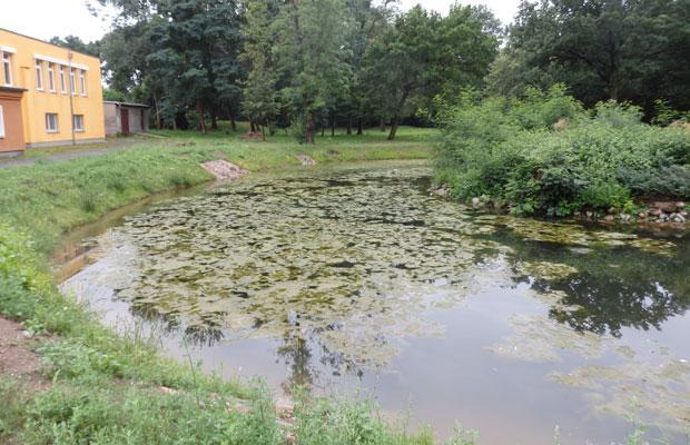 Teich vor der Sanierung